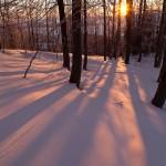 Tudi sonce išče svojo pot med drevesi