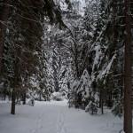 Spokojnost v gozdu
